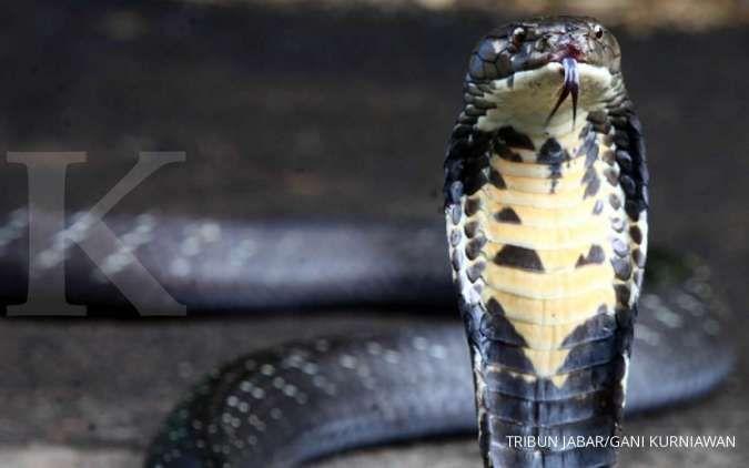 Catat! Daftar tanaman yang ditakuti ular