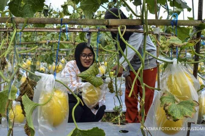 Upaya mendorong pengusaha muda masuk bisnis pertanian, peternakan dan perikanan