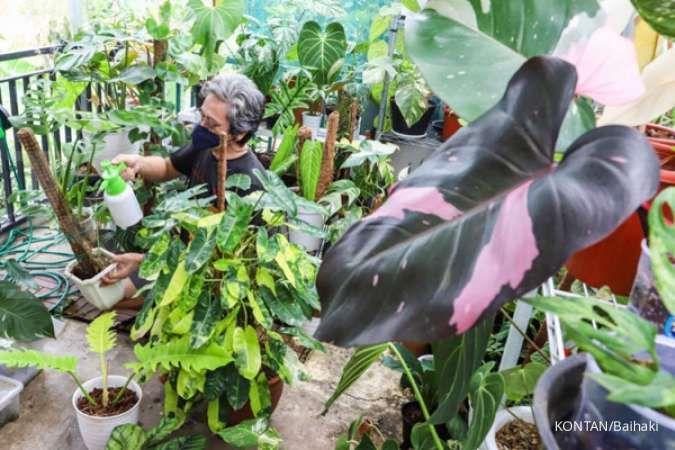 Daftar tanaman hias indoor kekinian, dari pohon dolar hingga lidah mertua